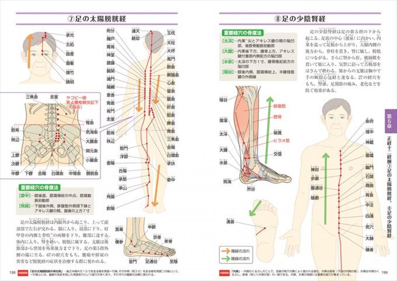 オールカラー版 基本としくみがよくわかる東洋医学の教科書   ナツメ社